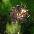 Lonely Leaf On Moss by Douglas Barnett