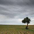 Lonely Olive Tree With Moving Clouds by Michalakis Ppalis