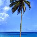Lonely Palm Tree Los Tubos Beach by Thomas R Fletcher