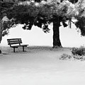 Lonely Park Bench by Elle Arden Walby