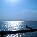 Lonely Seagull by Dave Chafin