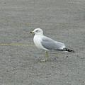 Lonely Seagull by Wanda-Lynn Searles