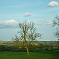 Lonely Tree Cotswold England by Douglas Barnett