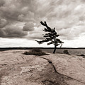 Lonely Tree by Georgy Kuznetsov