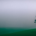 Lonely Tree In The Fog by Don Schwartz