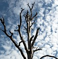 Lonely Tree by Kenneth Albin