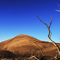 Lonely Bare Tree And Sanddunes by Vishwanath Bhat