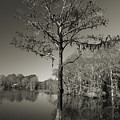 Lonely Tree by Timothy Markley