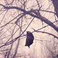 Lonely Winter Leaf by Antique Images