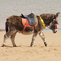 Lonesome Donkey by Gillian Lovett