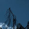 Lonesome Dove by Mykel Davis