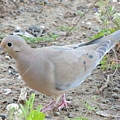 Lonesome Dove by Traci Hallstrom