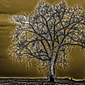 Lonesome Tree by William Norton