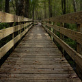 Long Boardwalk Through The Wetlands by Mitch Spence