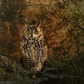 Long Eared Owl Surprise by Vicki Stansbury
