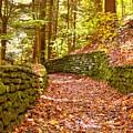 Long Fall Walk  by Jennifer Craft
