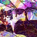 Long Haired Chihuahua Dog Pet  by PixBreak Art