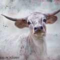 Long Horn by Kathy Russell