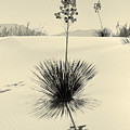 Long Shadows by Brian M Lumley