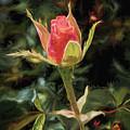 Long Stemmed Rose by Susan Rissi Tregoning