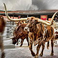 Longhorn by Kelley King