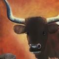 Longhorn Stare by Joni McPherson