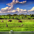 Longhorns At The Ranch by Rogermike Wilson