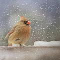 Longing For Snow Boots Bird Art by Jai Johnson