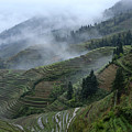 Longsheng Rice Terraces by Michele Burgess