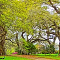 Longwood Plantation In Spring Glory by Susan Bryant