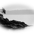 Lonley Gull by J D Banks