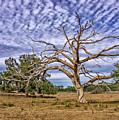 Lonley Tree by Dennis Dugan