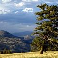 Lonly Tree by Marty Koch