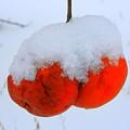 Look At Them Apples by Julie Lueders