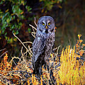 Look Me In The Eyes by Greg Norrell