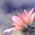 Look Toward The Shy I Of 3 by CT Decorative Photography