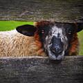 Lookin At Ewe by Skip Hunt