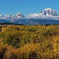 Looking Across Willow Flats To Mt Moran by Yeates Photography