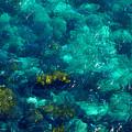 Looking Down At Shellow Water by Miroslava Jurcik