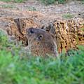 Looking For Intruders by Belinda Stucki