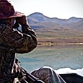 Looking For Musk Ox In Greenland by Allan Iversen