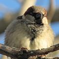 Looking Over The Nest by Lisa Jayne Konopka