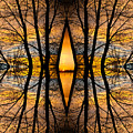 Looking Through The Trees Abstract Fine Art by James BO Insogna