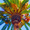 Looking Up At Palm Tree  by Amy Vangsgard