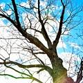 Looking Up by Jennifer Wick