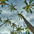 Looking Up The Hawaiian Palm Tree Hawaii Collection Art by Reid Callaway