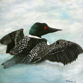 Loon by Rebecca  Fitchett