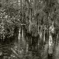 Loop Road Swamp #1 by Michael Kirk