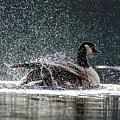 Splish Splash by Joy McAdams