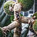 Loquat Man Photo by Gina O'Brien